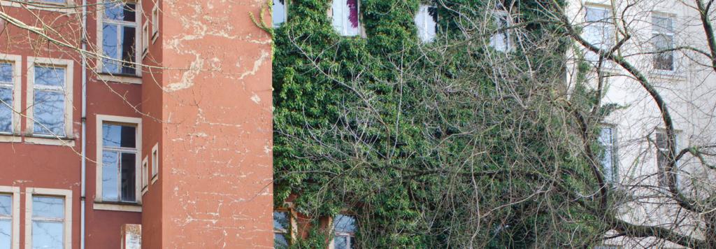 Die Fassade von einem mehrstöckigen Wohnhaus ist auf einer Etage der rechten Seite komplett von Efeu bedeckt. Die Fenster der darüber liegenden Etage sind freigeschnitten.