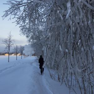 Dichte, zugefrorene Zweige ragen weit über einen schmalen Pfad im Schnee. Ein Mensch mit einem Strauß weißer Ballons läuft daran vorbei.